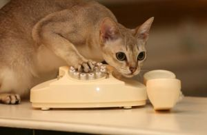 Picture by Mark Richards-Bruce the Cat dials 999 and gets the cops calling!