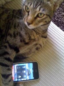 Cat Calling Mum