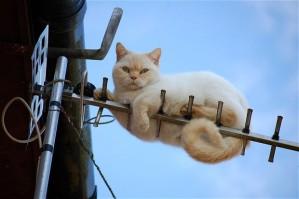 cat-earial_1935239b