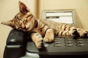 Cat-on-the-phone-2669339