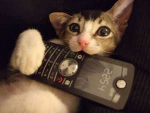 spoof-call-cat